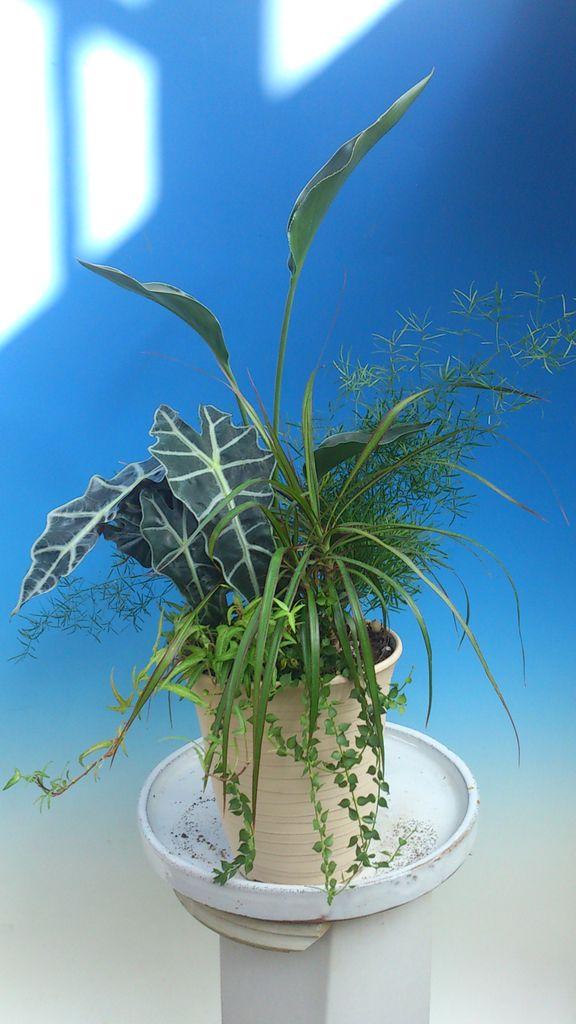 花ギフト|フラワーギフト|誕生日 花|カノシェ話題|スタンド花|ウエディングブーケ|花束|花屋|DSC_1055
