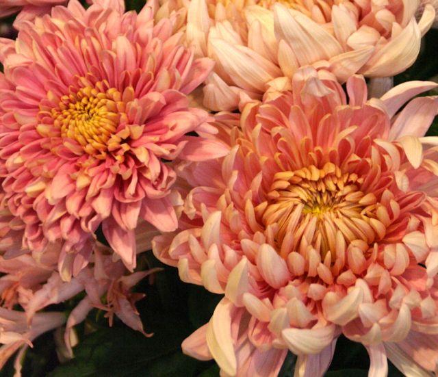 花ギフト フラワーギフト 誕生日 花 カノシェ話題 スタンド花 ウエディングブーケ 花束 花屋 IMG_9726