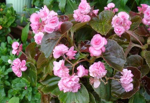 花ギフト|フラワーギフト|誕生日 花|カノシェ話題|スタンド花|ウエディングブーケ|花束|花屋|こんぺいとう
