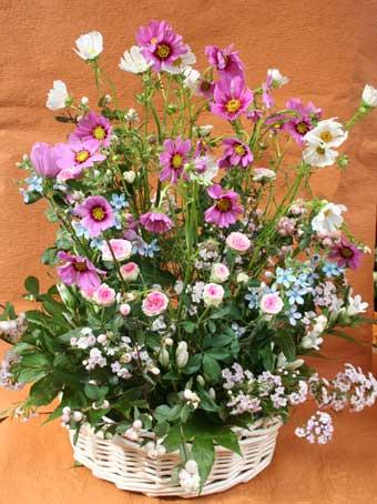 花ギフト|フラワーギフト|誕生日 花|カノシェ話題|スタンド花|ウエディングブーケ|花束|花屋|コスモスアレンジ