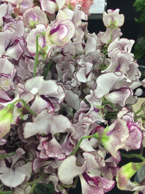 花ギフト|フラワーギフト|誕生日 花|カノシェ話題|スタンド花|ウエディングブーケ|花束|花屋|IMG_7133