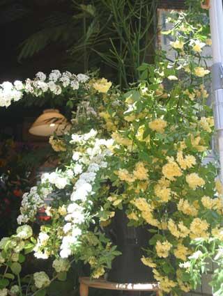 花ギフト フラワーギフト 誕生日 花 カノシェ話題 スタンド花 ウエディングブーケ 花束 花屋 もっこうばら