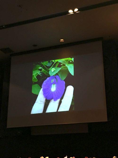 花ギフト|フラワーギフト|誕生日 花|カノシェ話題|スタンド花|ウエディングブーケ|花束|花屋|IMG_4210
