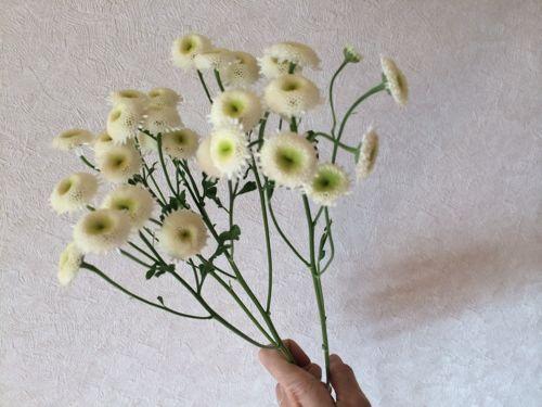 花ギフト|フラワーギフト|誕生日 花|カノシェ話題|スタンド花|ウエディングブーケ|花束|花屋|IMG_5101
