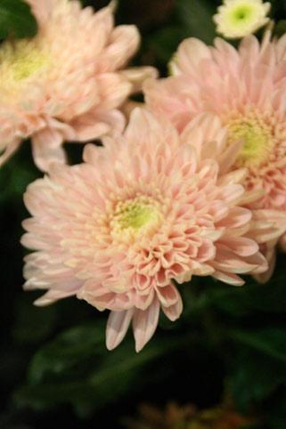 花ギフト フラワーギフト 誕生日 花 カノシェ話題 スタンド花 ウエディングブーケ 花束 花屋 IMG_0114