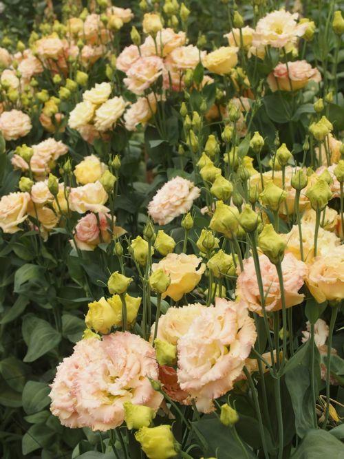 花ギフト|フラワーギフト|誕生日 花|カノシェ話題|スタンド花|ウエディングブーケ|花束|花屋|P6080055