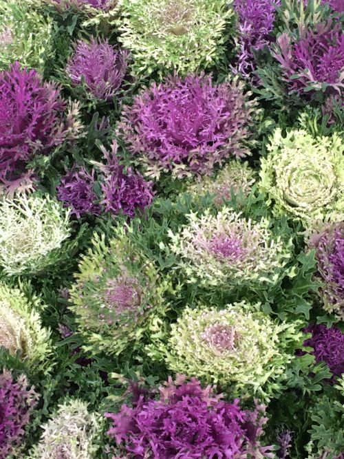 花ギフト|フラワーギフト|誕生日 花|カノシェ話題|スタンド花|ウエディングブーケ|花束|花屋|IMG_8239