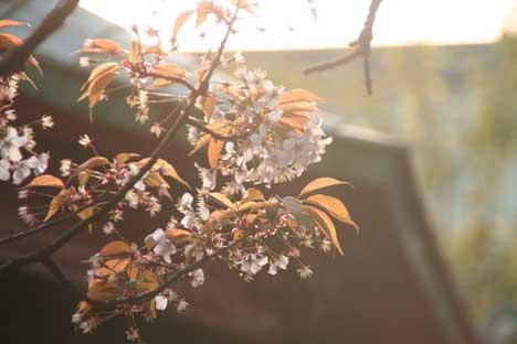花ギフト|フラワーギフト|誕生日 花|カノシェ話題|スタンド花|ウエディングブーケ|花束|花屋|上野桜