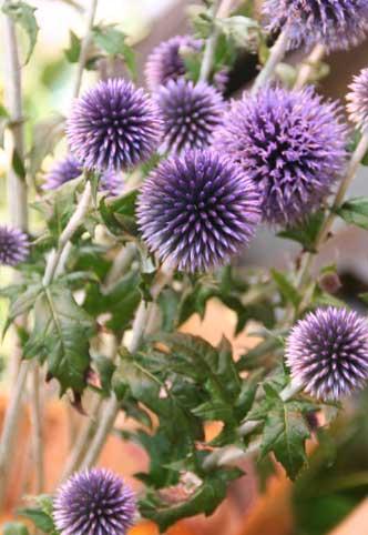花ギフト|フラワーギフト|誕生日 花|カノシェ話題|スタンド花|ウエディングブーケ|花束|花屋|ベッチーズ
