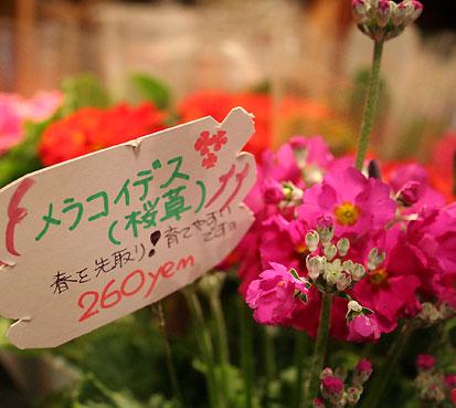 花ギフト|フラワーギフト|誕生日 花|カノシェ話題|スタンド花|ウエディングブーケ|花束|花屋|4