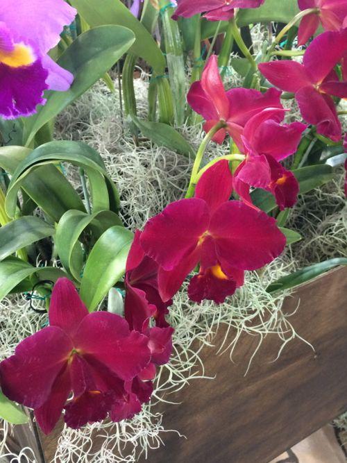 花ギフト|フラワーギフト|誕生日 花|カノシェ話題|スタンド花|ウエディングブーケ|花束|花屋|IMG_9414