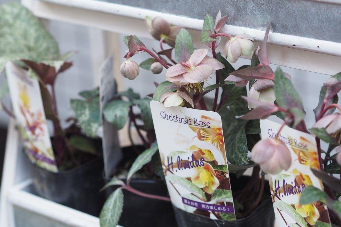 花ギフト|フラワーギフト|誕生日 花|カノシェ話題|スタンド花|ウエディングブーケ|花束|花屋|P2262200