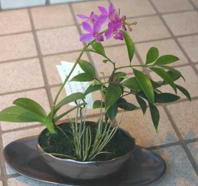 花ギフト|フラワーギフト|誕生日 花|カノシェ話題|スタンド花|ウエディングブーケ|花束|花屋|ミニ