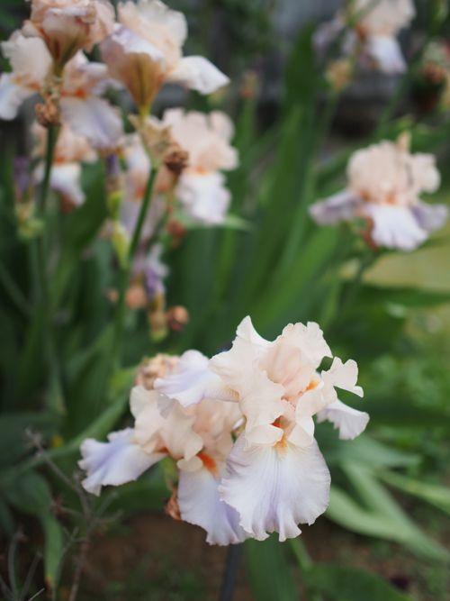 花ギフト|フラワーギフト|誕生日 花|カノシェ話題|スタンド花|ウエディングブーケ|花束|花屋|P1010763