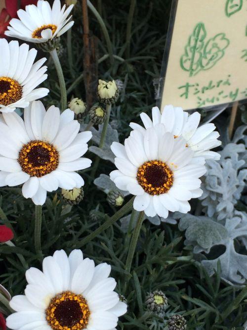 花ギフト フラワーギフト 誕生日 花 カノシェ話題 スタンド花 ウエディングブーケ 花束 花屋 IMG_9046