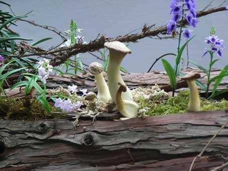 花ギフト|フラワーギフト|誕生日 花|カノシェ話題|スタンド花|ウエディングブーケ|花束|花屋|きのこ