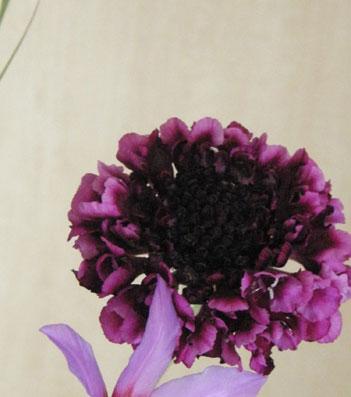 花ギフト フラワーギフト 誕生日 花 カノシェ話題 スタンド花 ウエディングブーケ 花束 花屋 sukabi