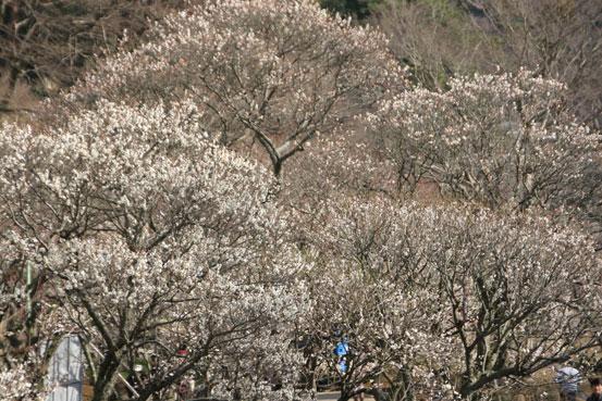 花ギフト|フラワーギフト|誕生日 花|カノシェ話題|スタンド花|ウエディングブーケ|花束|花屋|umeume
