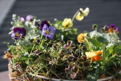 花ギフト|フラワーギフト|誕生日 花|カノシェ話題|スタンド花|ウエディングブーケ|花束|花屋|IMG_6602