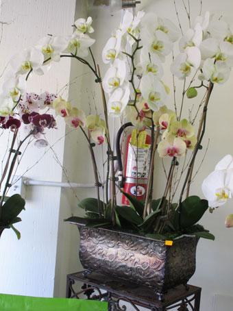 花ギフト|フラワーギフト|誕生日 花|カノシェ話題|スタンド花|ウエディングブーケ|花束|花屋|ranarrange