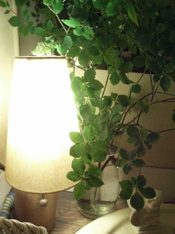 花ギフト|フラワーギフト|誕生日 花|カノシェ話題|スタンド花|ウエディングブーケ|花束|花屋|はと2