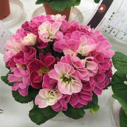 花ギフト|フラワーギフト|誕生日 花|カノシェ話題|スタンド花|ウエディングブーケ|花束|花屋|IMG_7055