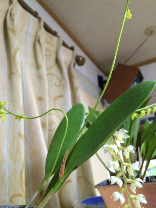 花ギフト|フラワーギフト|誕生日 花|カノシェ話題|スタンド花|ウエディングブーケ|花束|花屋|IMG_9679