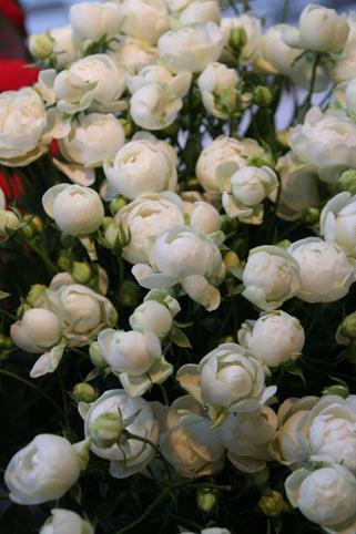 花ギフト|フラワーギフト|誕生日 花|カノシェ話題|スタンド花|ウエディングブーケ|花束|花屋|ウイット
