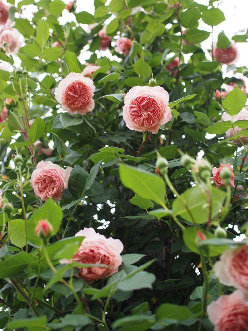 花ギフト|フラワーギフト|誕生日 花|カノシェ話題|スタンド花|ウエディングブーケ|花束|花屋|P1010813