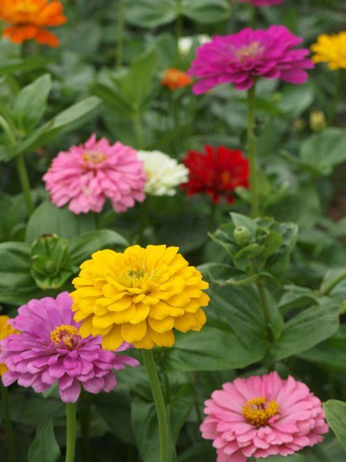 花ギフト|フラワーギフト|誕生日 花|カノシェ話題|スタンド花|ウエディングブーケ|花束|花屋|P8150190
