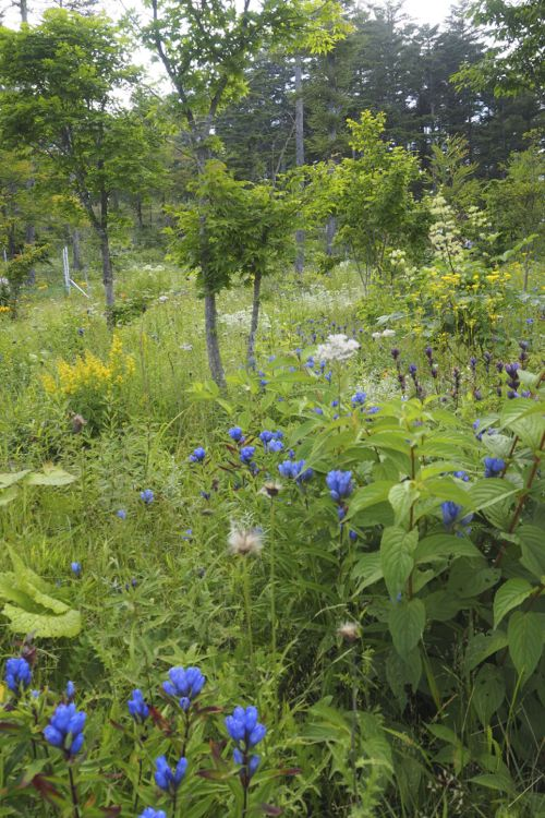 花ギフト|フラワーギフト|誕生日 花|カノシェ話題|スタンド花|ウエディングブーケ|花束|花屋|P8120029
