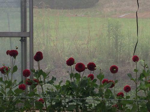 花ギフト|フラワーギフト|誕生日 花|カノシェ話題|スタンド花|ウエディングブーケ|花束|花屋|IMG_5447
