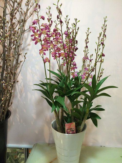 花ギフト|フラワーギフト|誕生日 花|カノシェ話題|スタンド花|ウエディングブーケ|花束|花屋|IMG_9613