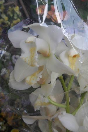 花ギフト|フラワーギフト|誕生日 花|カノシェ話題|スタンド花|ウエディングブーケ|花束|花屋|h1
