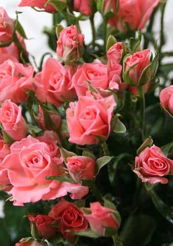 花ギフト|フラワーギフト|誕生日 花|カノシェ話題|スタンド花|ウエディングブーケ|花束|花屋|サンディアゴ