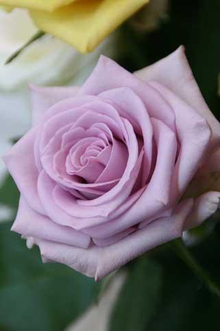 花ギフト|フラワーギフト|誕生日 花|カノシェ話題|スタンド花|ウエディングブーケ|花束|花屋|オーシャンソング