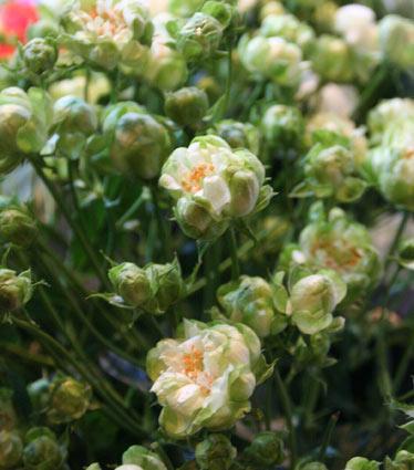 花ギフト|フラワーギフト|誕生日 花|カノシェ話題|スタンド花|ウエディングブーケ|花束|花屋|エクレール