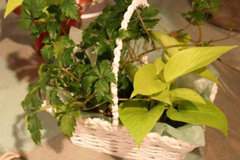 花ギフト|フラワーギフト|誕生日 花|カノシェ話題|スタンド花|ウエディングブーケ|花束|花屋|カンヨウ2