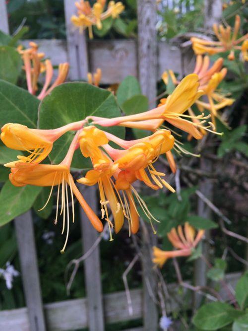花ギフト|フラワーギフト|誕生日 花|カノシェ話題|スタンド花|ウエディングブーケ|花束|花屋|IMG_5210