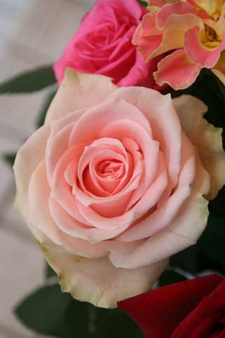 花ギフト|フラワーギフト|誕生日 花|カノシェ話題|スタンド花|ウエディングブーケ|花束|花屋|ニルバーナ
