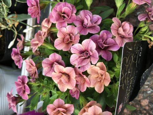 花ギフト|フラワーギフト|誕生日 花|カノシェ話題|スタンド花|ウエディングブーケ|花束|花屋|IMG_1136
