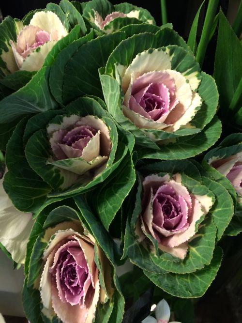 花ギフト|フラワーギフト|誕生日 花|カノシェ話題|スタンド花|ウエディングブーケ|花束|花屋|IMG_8909