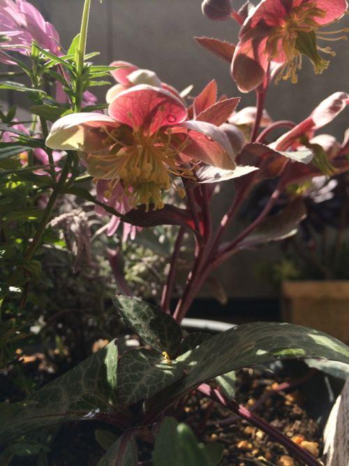 花ギフト|フラワーギフト|誕生日 花|カノシェ話題|スタンド花|ウエディングブーケ|花束|花屋|IMG_0083