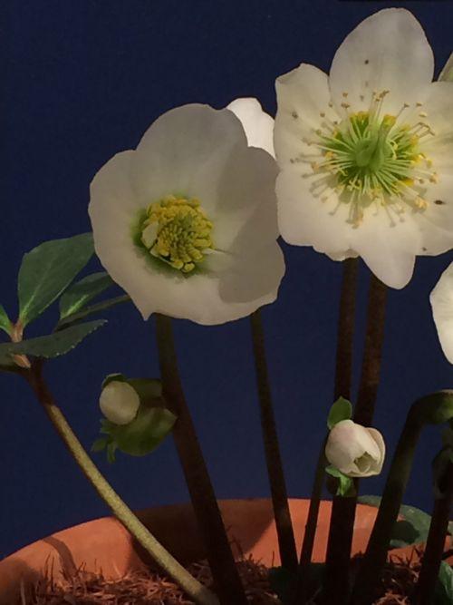 花ギフト|フラワーギフト|誕生日 花|カノシェ話題|スタンド花|ウエディングブーケ|花束|花屋|IMG_9505