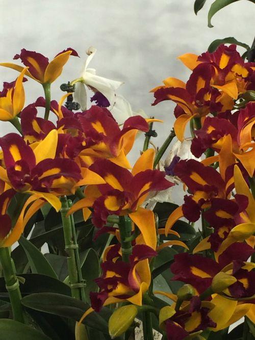 花ギフト|フラワーギフト|誕生日 花|カノシェ話題|スタンド花|ウエディングブーケ|花束|花屋|IMG_9460