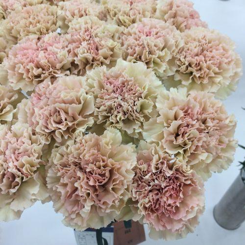 花ギフト|フラワーギフト|誕生日 花|カノシェ話題|スタンド花|ウエディングブーケ|花束|花屋|IMG_7087