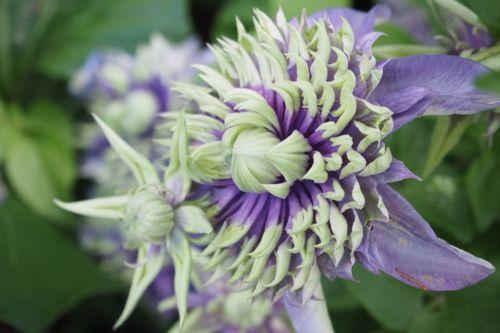 花ギフト|フラワーギフト|誕生日 花|カノシェ話題|スタンド花|ウエディングブーケ|花束|花屋|P6022771