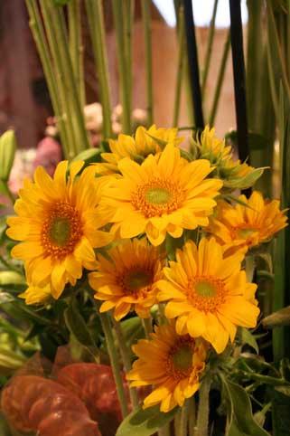 花ギフト|フラワーギフト|誕生日 花|カノシェ話題|スタンド花|ウエディングブーケ|花束|花屋|ひま2
