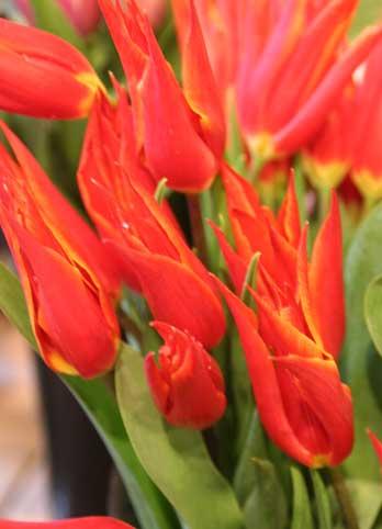 花ギフト|フラワーギフト|誕生日 花|カノシェ話題|スタンド花|ウエディングブーケ|花束|花屋|アラジン