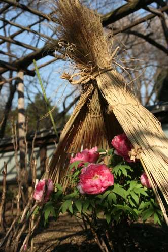 花ギフト|フラワーギフト|誕生日 花|カノシェ話題|スタンド花|ウエディングブーケ|花束|花屋|ぼたんわら